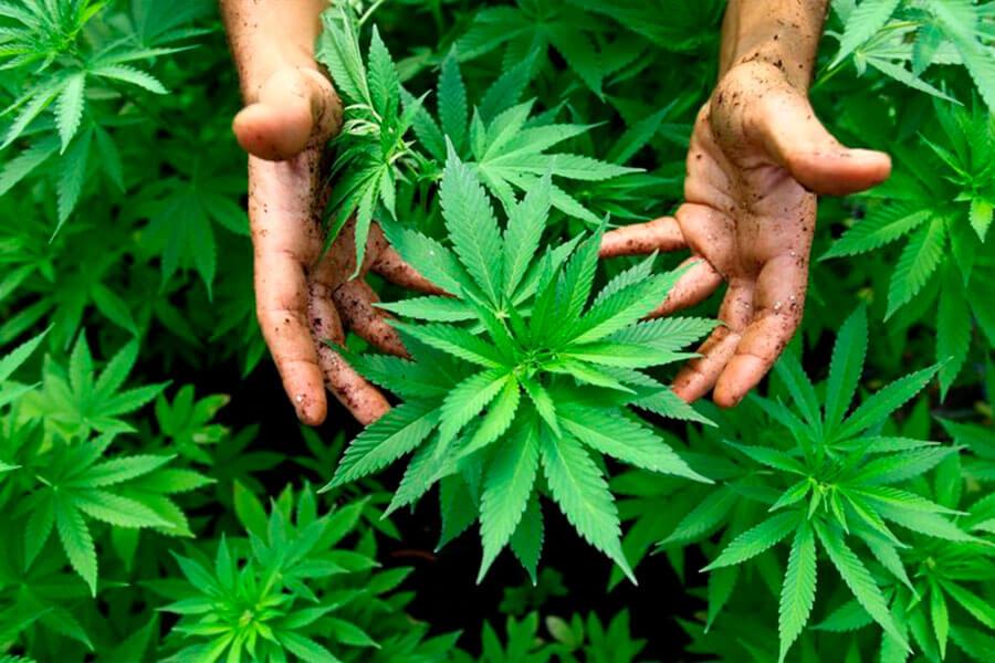 лечение зависимости от марихуаны Харьков